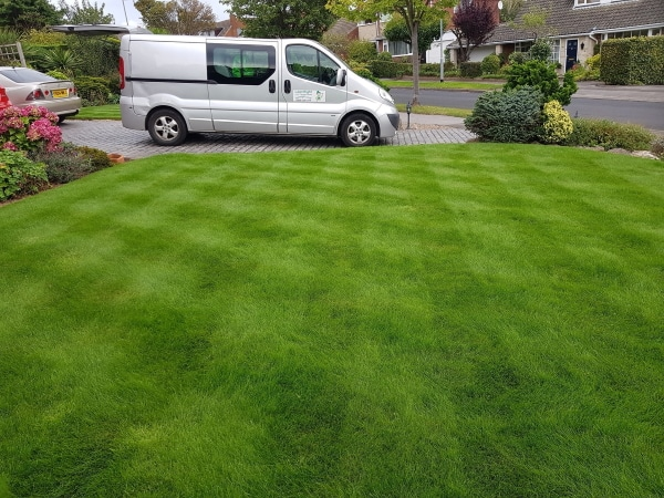 lush green lawn from lawnright